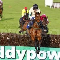Pardubice and Grand National Horse FOR SALE
