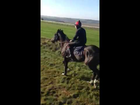 'Morning on the Gallops' Red Letter Day Experience